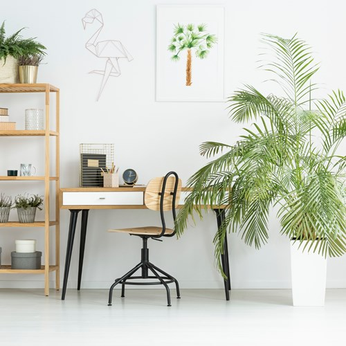 The beauty of plants in your flexible workspace