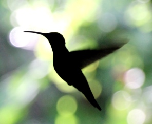 Hummingbird: Google's Biggest Algorithm Update in 3 Years (and what to do about it)